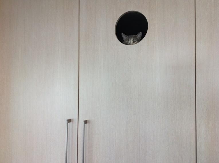 Lulu_the_Cat_in_Hole_JPG