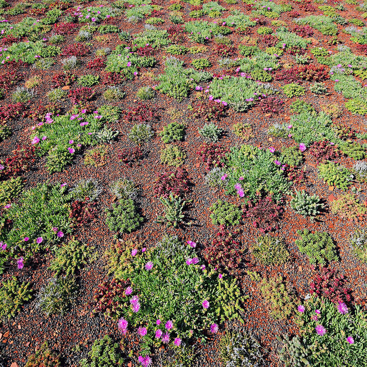 Olive House_mediterian garden by LOG-URBIS 23